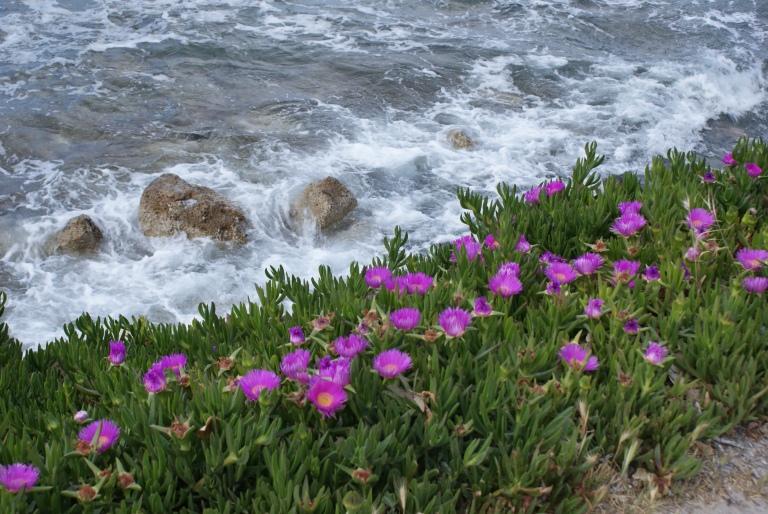 Wybrzeże w drodze z Chanii do Agia Marina.